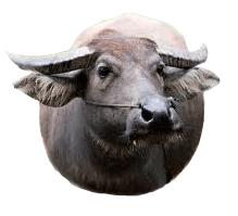 buffel-icoon-foto