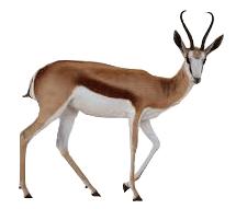 springbok-icoon