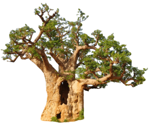 Baobab-icoon