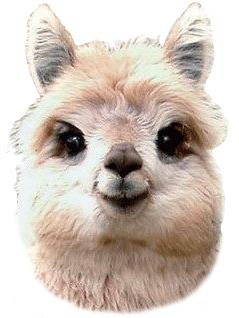 Icoon-alpaca